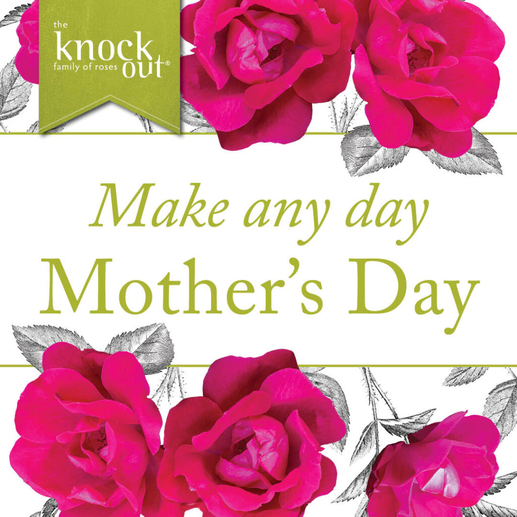 Open Knock Out® Roses Make any day Mother's Day Instagram Post