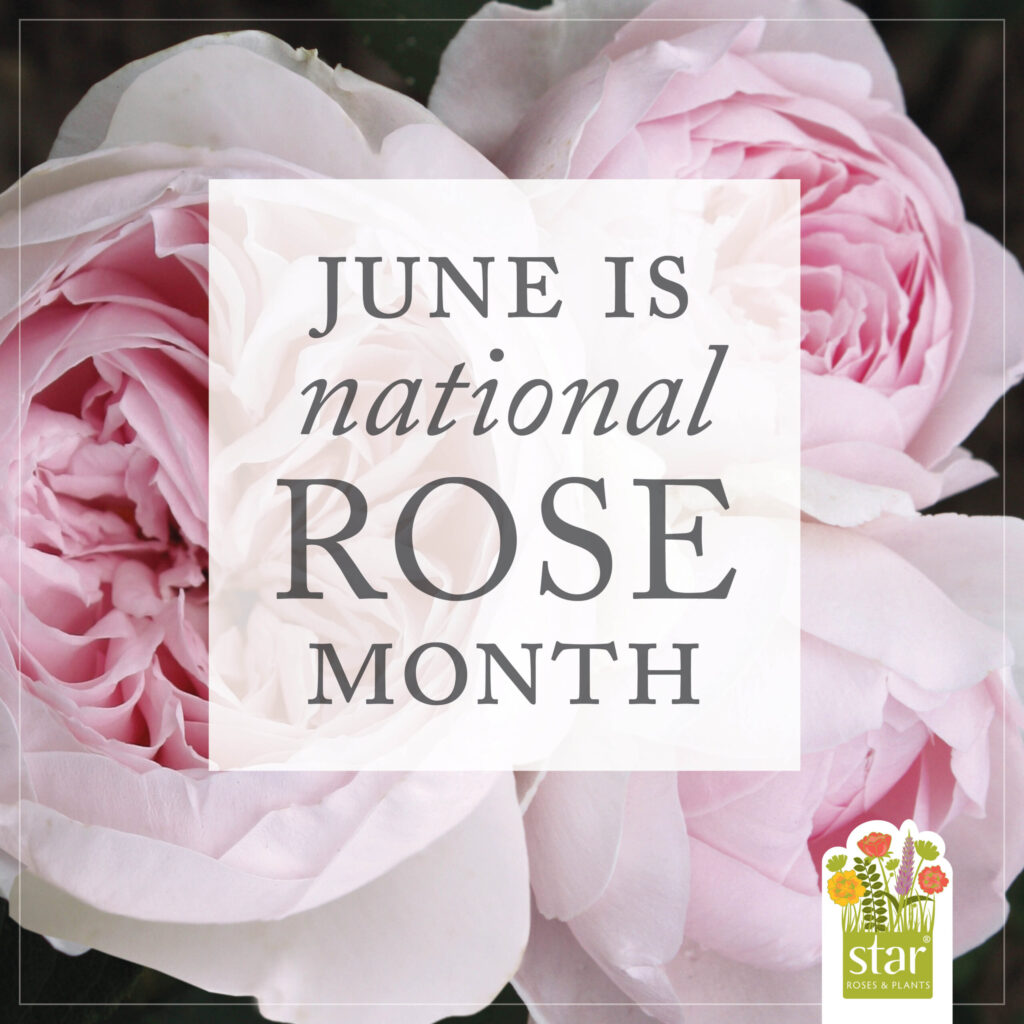Open June is National Rose Month Post for Instagram