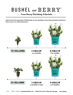 Open the Bushel and Berry Cane Berry Finishing Schedule PDF