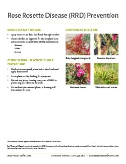 Go to the Rose Rosette Disease Prevention Information