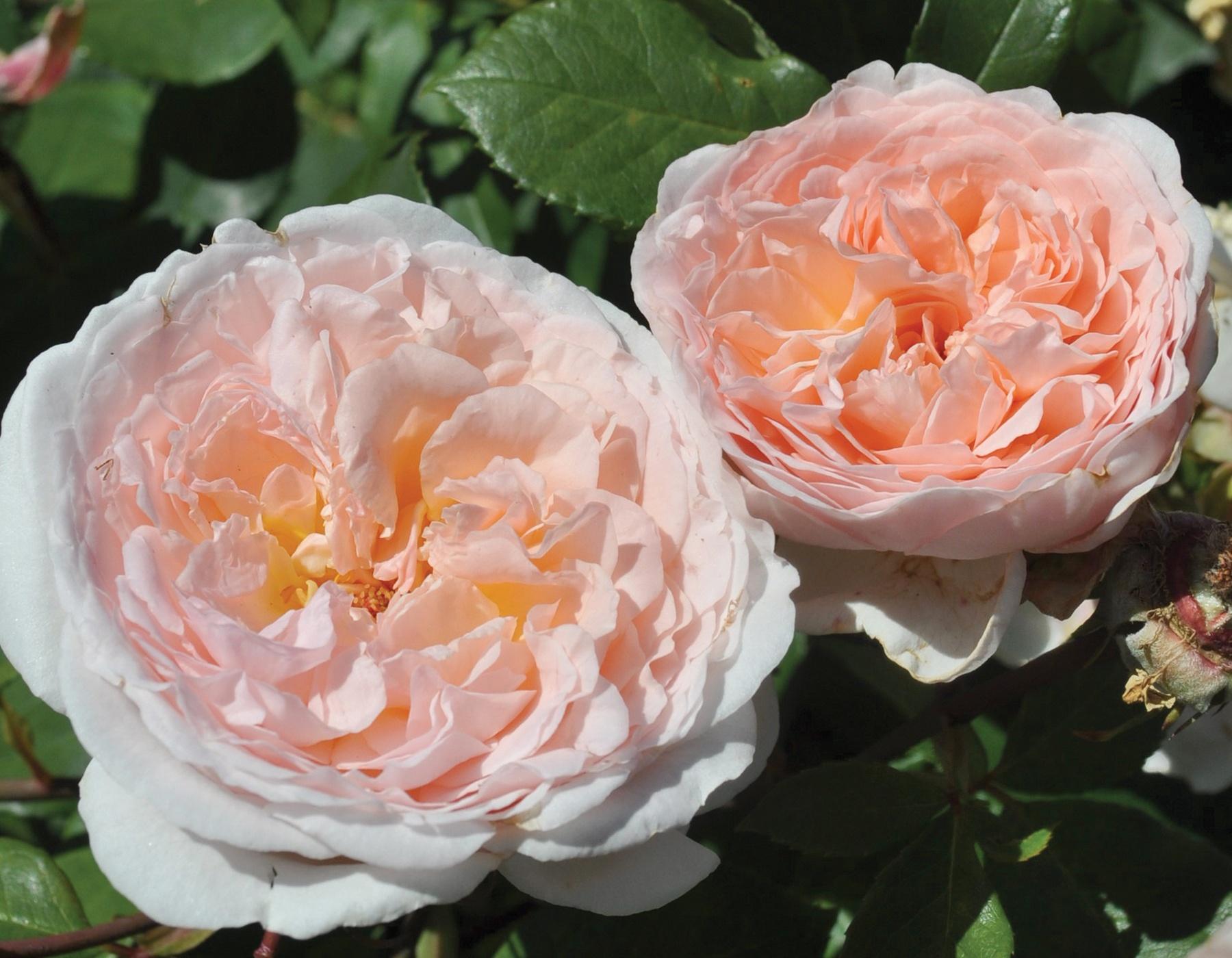 Bliss Parfuma 3