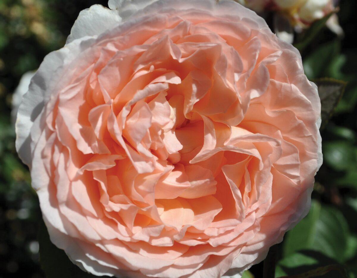 Bliss Parfuma 1