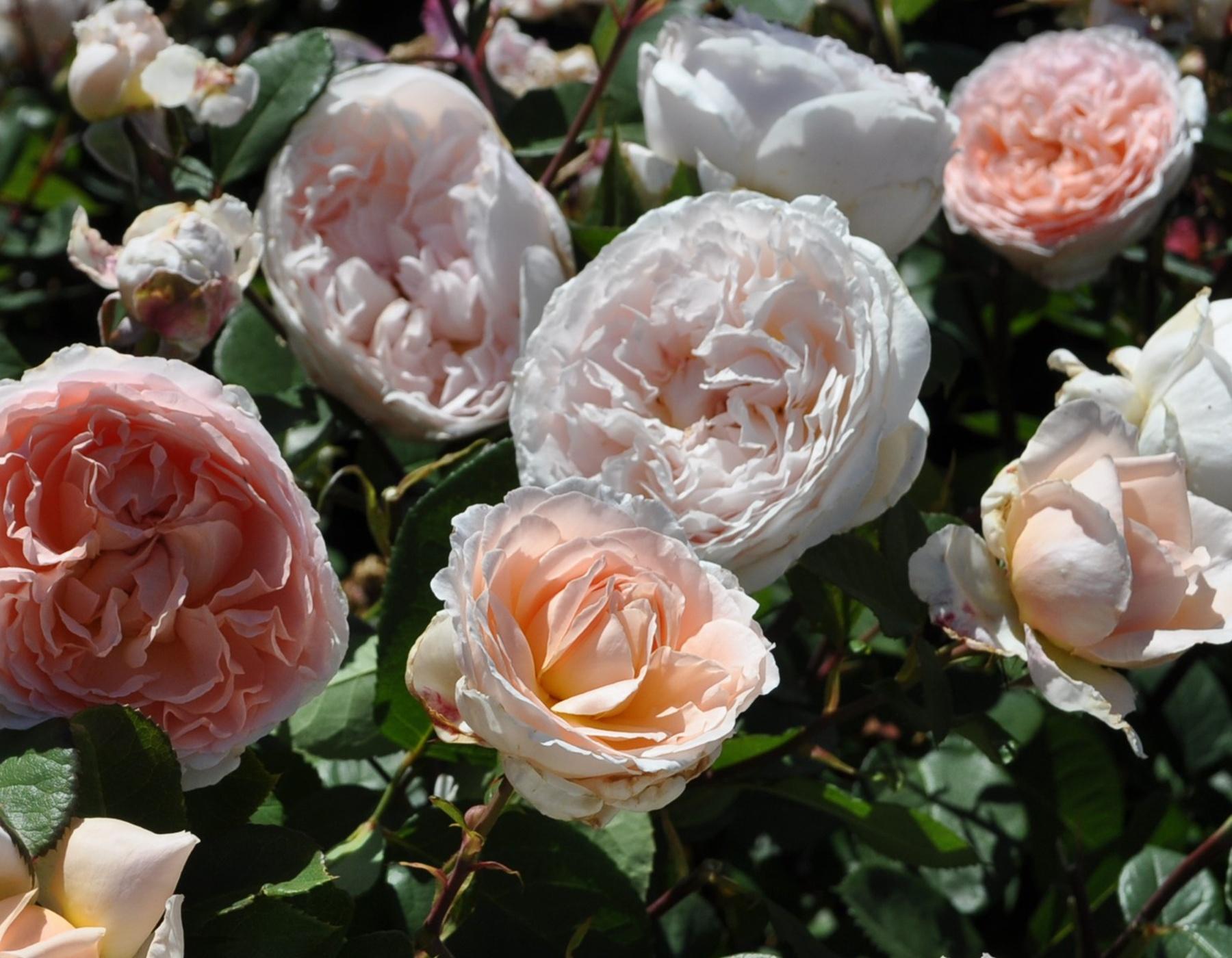 Bliss Parfuma 2