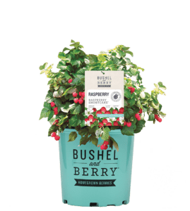 Bushel and Berry