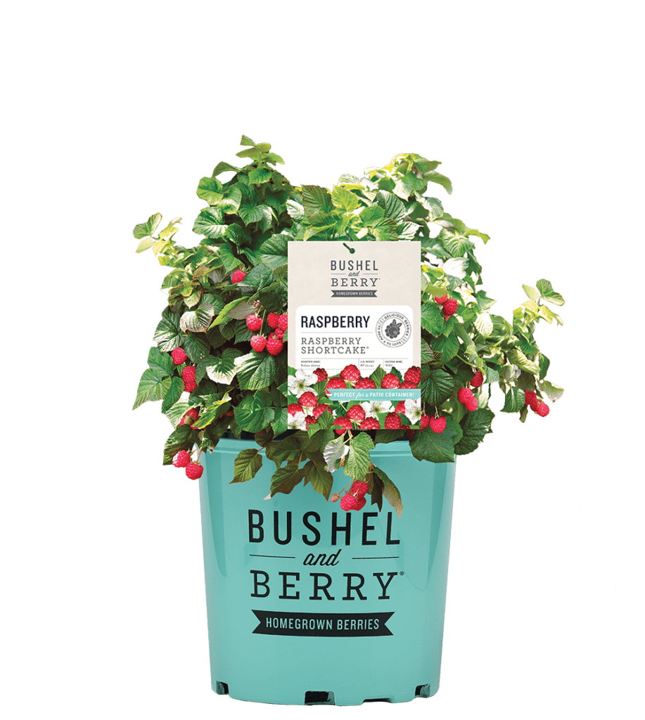 Go to the Bushel and Berry® Homegrown Berries Website