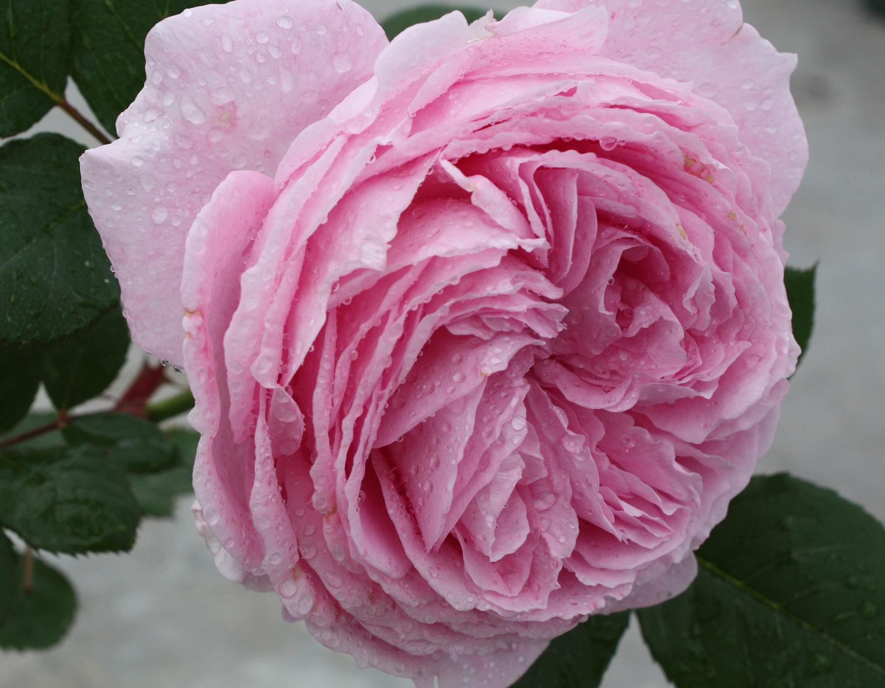 Summer Romance Parfuma 1