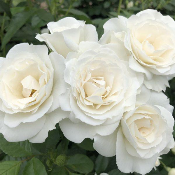 White Veranda