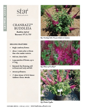 Open the Buddleia CranRazz Grower Guide