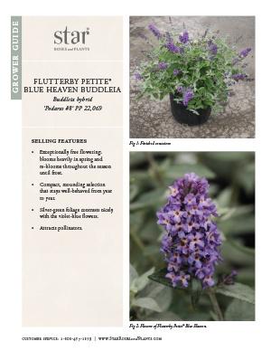 Open the Buddleia Flutterby Petite Blue Heaven Grower Guide