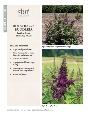 Open the Buddleia RoyalRazz Grower Guide