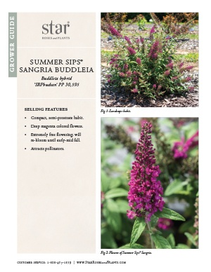 Open the Buddleia Summer Sips Sangria Grower Guide