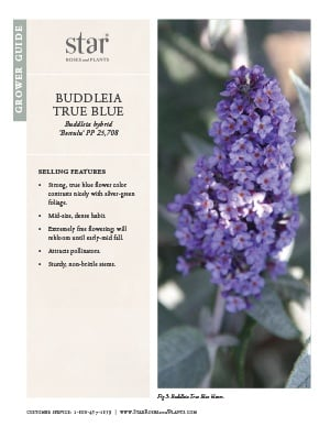 Open the Buddleia True Blue Grower Guide