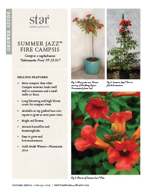 Open the Campsis Summer Jazz Fire Grower Guide