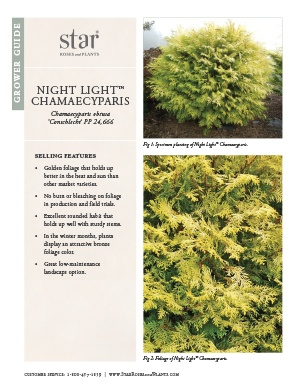 Open the Chamaecyparis Night Lights Grower Guide
