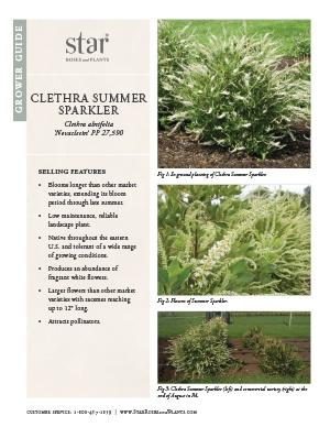 Open the Clethra Summer Sparkler Grower Guide