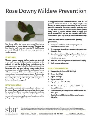 Open the Rose Downy Mildew Prevention PDF