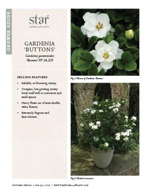 Open the Gardenia Buttons Grower Guide