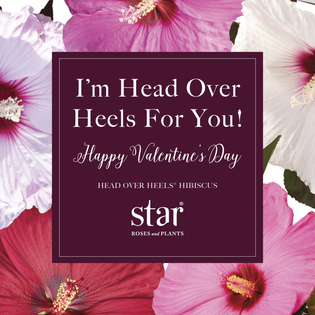 Open I'm Head Over Heels For You Valentine's Post for Instagram