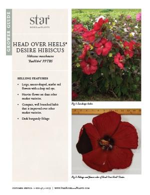 Open the Hibiscus Head Over Heels Desire Grower Guide