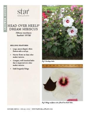 Open the Hibiscus Head Over Heels Dream Grower Guide