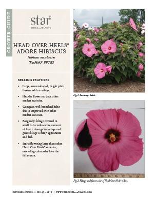 Open the Hibiscus Head Over Heels Adore Grower Guide