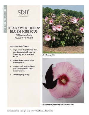 Open the Hibiscus Head Over Heels Blush Grower Guide
