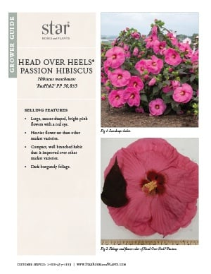 Open the Hibiscus Head Over Heels Passion Grower Guide