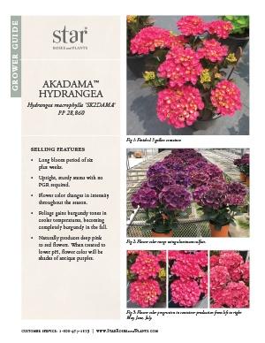 Open the Hydrangea Akadama Grower Guide