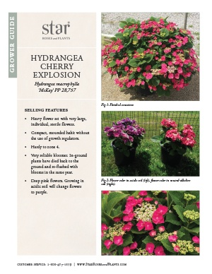 Open the Hydrangea Cherry Explosion Grower Guide