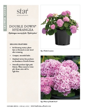 Open the Hydrangea Double Down Grower Guide