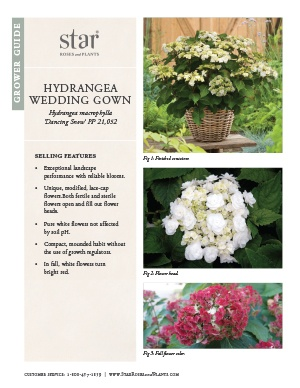 Open the Hydrangea Wedding Gown Grower Guide