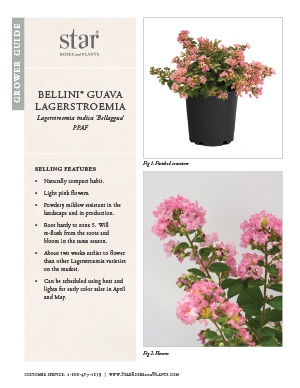 Open the Lagerstroemia Bellini Guava Grower Guide