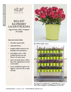 Open the Lagerstroemia Bellini Raspberry Grower Guide