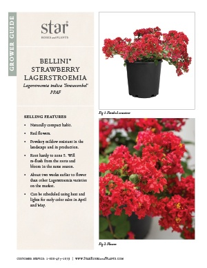 Open the Lagerstroemia Bellini Strawberry Grower Guide