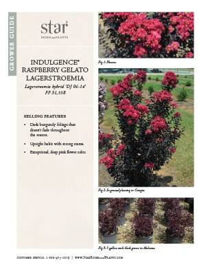 Open the Lagerstroemia Raspberry Gelato Grower Guide