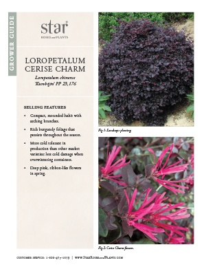 Open the Loropetalum Cerise Charm Grower Guide