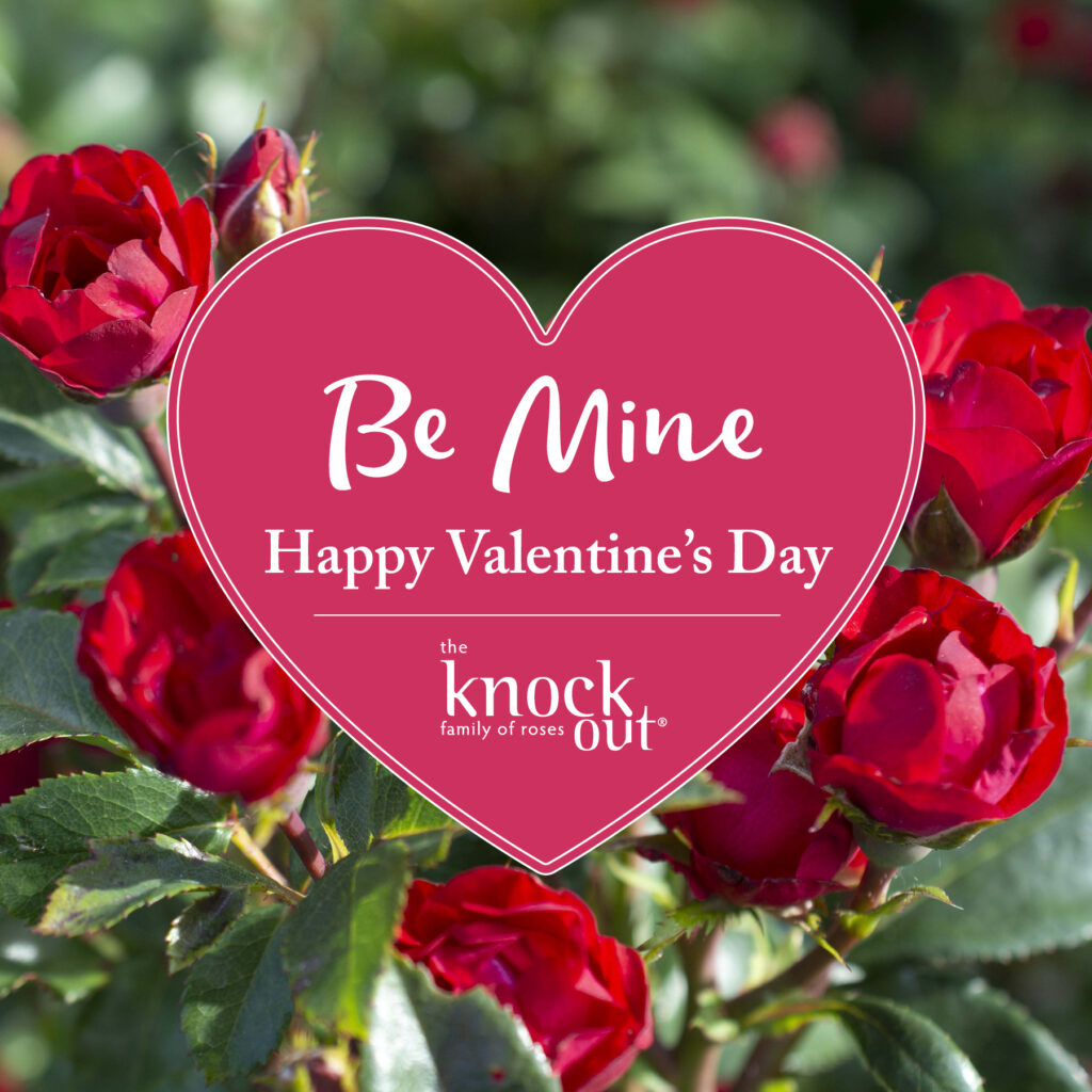 Open Be Mine Happy Valentine's Day Petite Knock Out Instagram Image