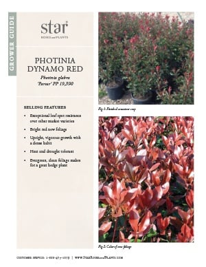 Open the Photinia Dynamo Red Grower Guide