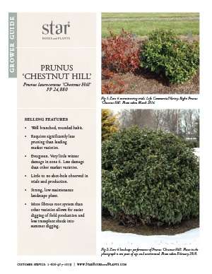 Open the Prunus Chestnut Hill Grower Guide