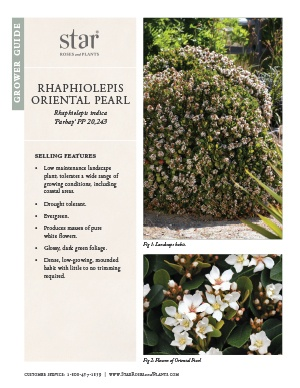 Open the Rhaphiolepis Oriental Pearl Grower Guide