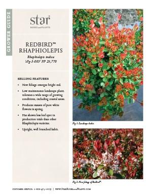Open the Rhaphiolepis Redbird Grower Guide