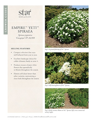 Open the Spiraea Yeti Grower Guide