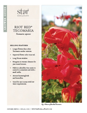 Open the Tecomaria Riot Red Grower Guide