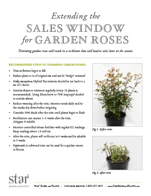 Open the Extending the Sales Window for Garden Roses PDF