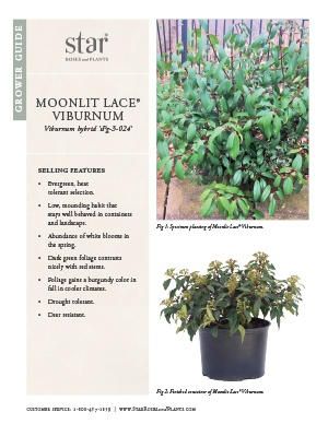 Open the Viburnum Moonlit Lace Grower Guide